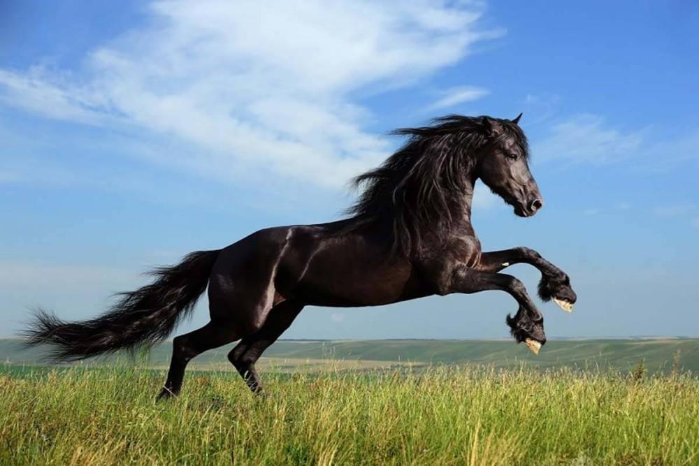 انواع نژاد اسب در کشور ایران کدامند؟