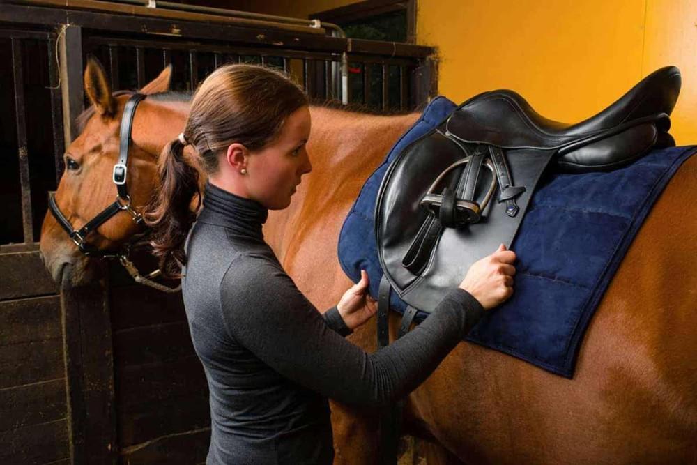 آموزش شیوه صحیح زین گذاری اسب به سوارکاران