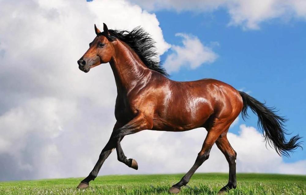 تاریخچه اسب و سوارکاری در ایران باستان