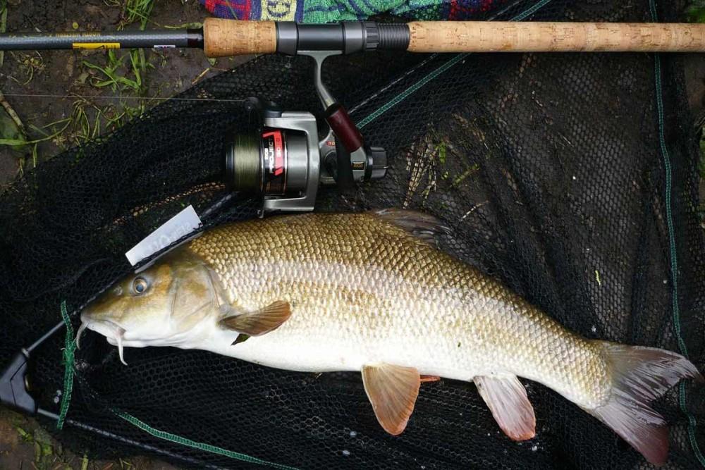 آشنایی با ماهی زرد پر و روش های صید ورزشی آن