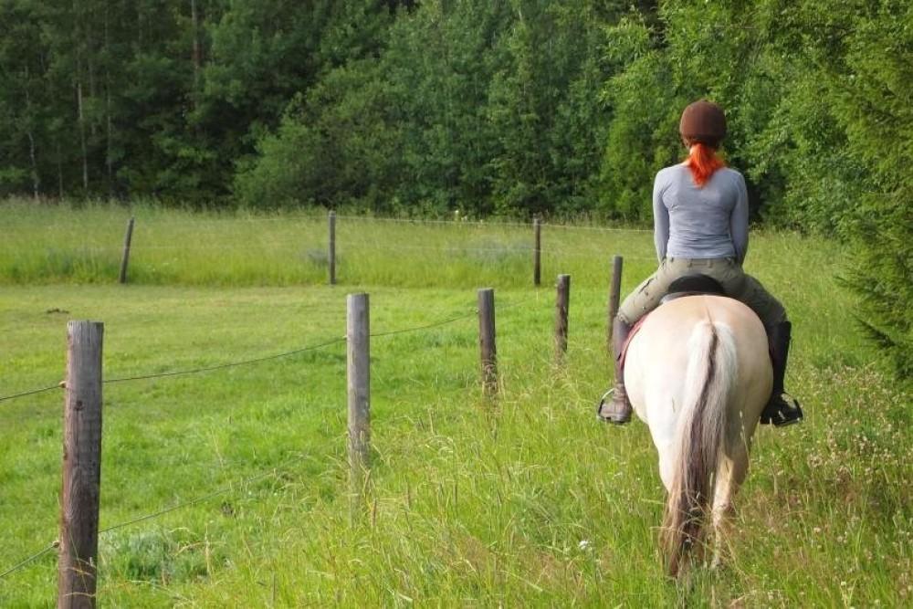 آموزش سوارکاری (اسب سواری) برای مبتدیان - اصول اولیه ، ایمنی ، اشتباهات