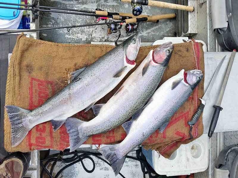 تازه نگه داشتن ماهی های صید شده
