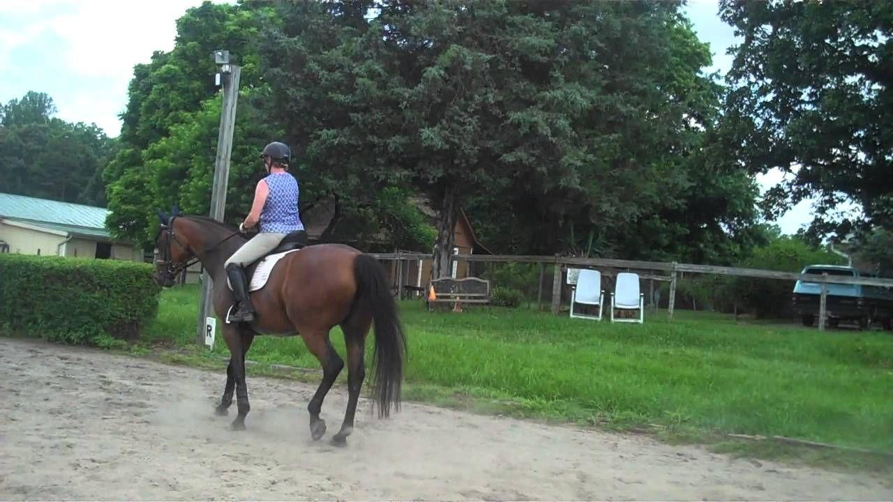 روش راه بردن اسب در آموزش اسب سواری
