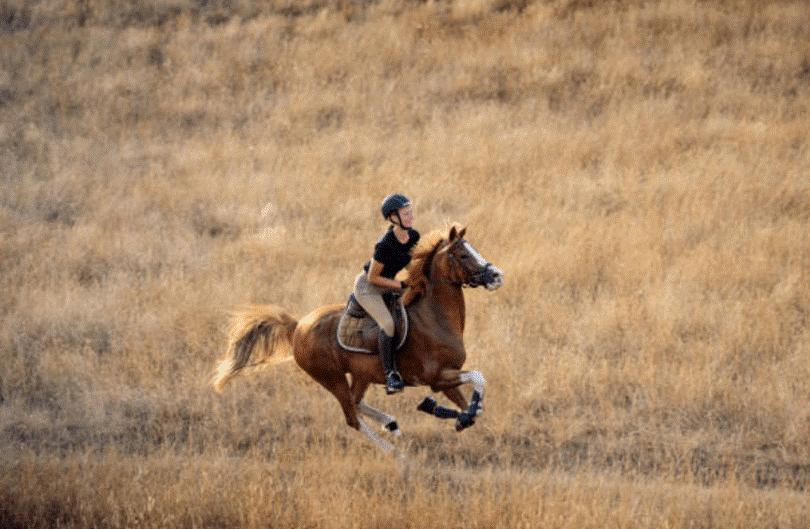 تاختن با اسب خیلی شبیه به حرکت چهار نعل است