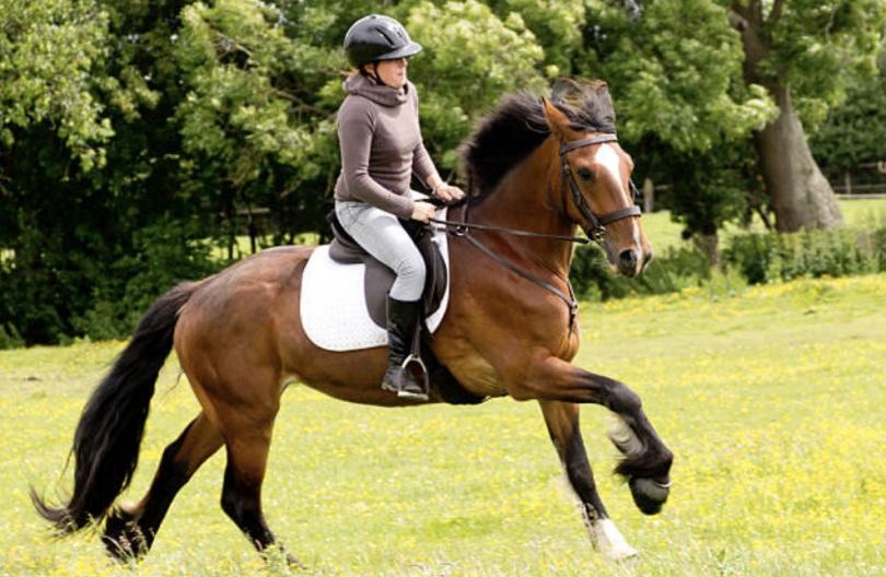 حرکت چهار نعل در آموزش اسب سواری