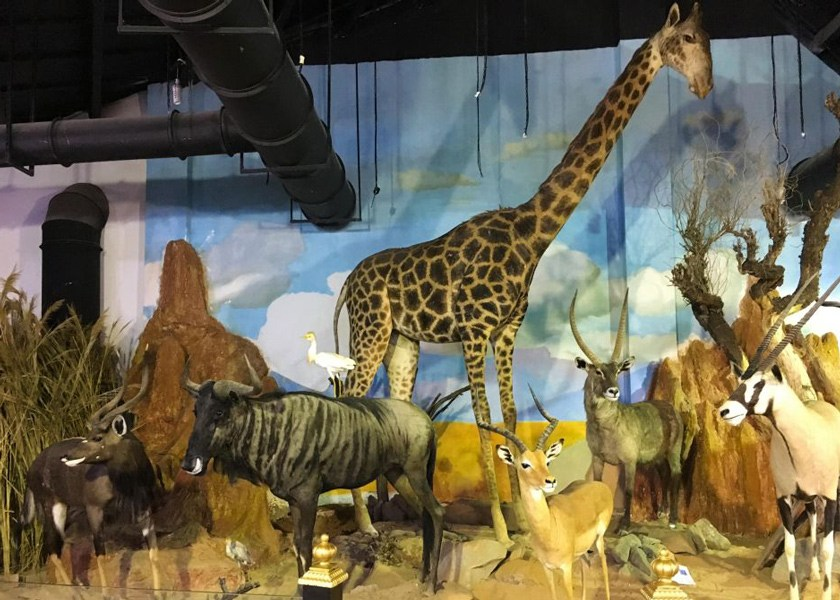 موزه آثار طبیعی و حیات وحش ایران